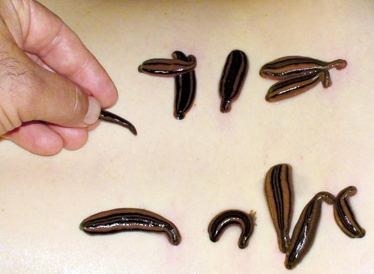 как вылечить глистов полынью